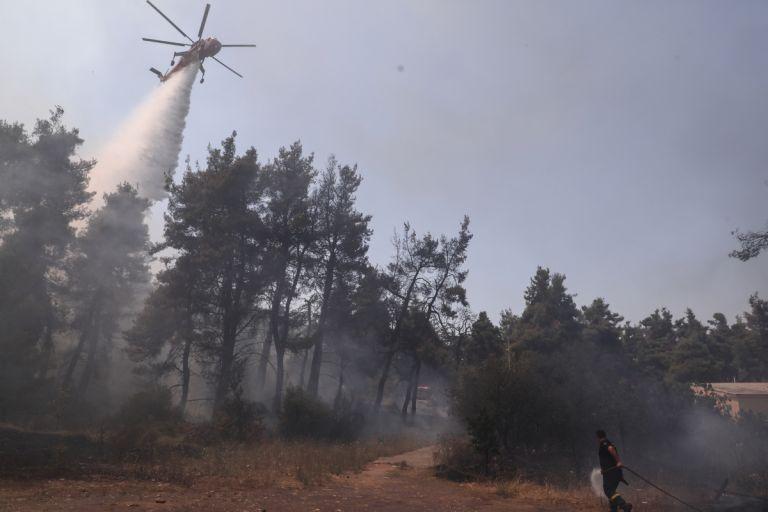 Φωτιά στη Σταμάτα: Για εμπρησμό από αμέλεια κατηγορείται ο 64χρονος μελισσοκόμος | tanea.gr