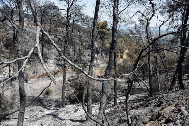 Αχαΐα – Πώς μπήκαν οι φωτιές σε Δροσιά και Ελεκίστρα – Τι έγινε στη Ζήρια   tanea.gr