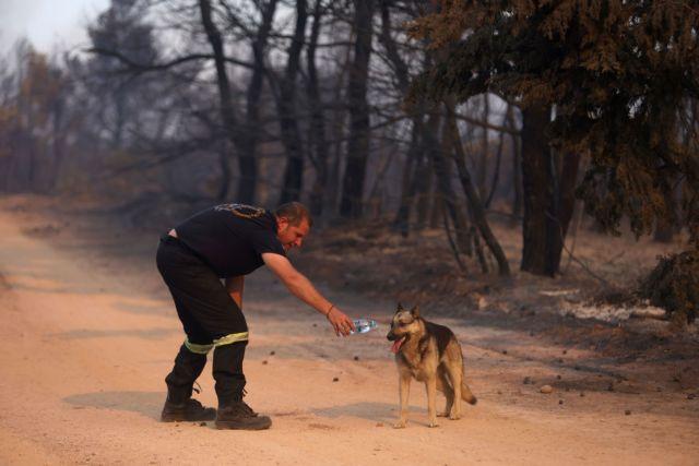 Φωτιά – Πρόεδρος της ANIMA στο MEGA – «Η φύση θα ανακάμψει εάν την αφήσουμε ήσυχη»   tanea.gr