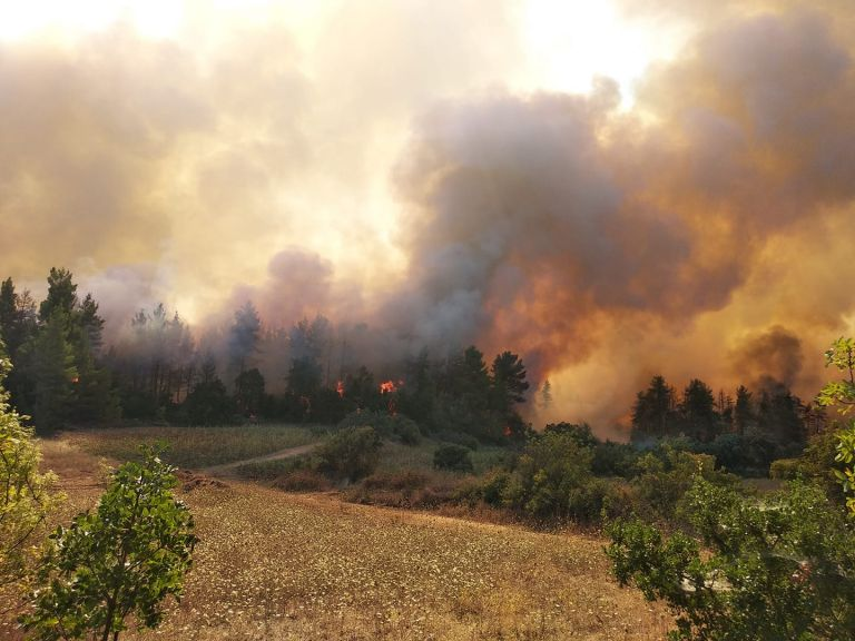 Φωτιά στην Εύβοια – 30 άνθρωποι επιβιβάστηκαν σε τουριστικό σκάφος | tanea.gr