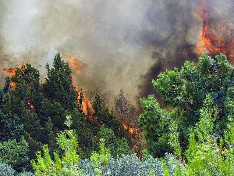 Φωτιά στην Ηλεία – Σε εξέλιξη δύο μεγάλα πύρινα μέτωπα στις περιοχές Χελιδόνι και Λάλα   tanea.gr
