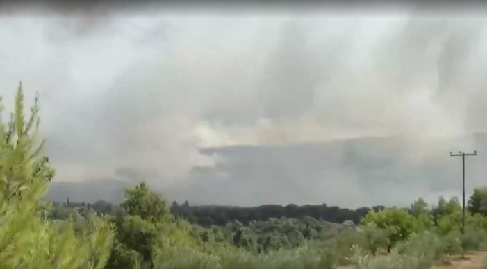 Φωτιά στην Αρκαδία – Τα 10 χιλιόμετρα φτάνει το μέτωπο στη Γορτυνία | tanea.gr