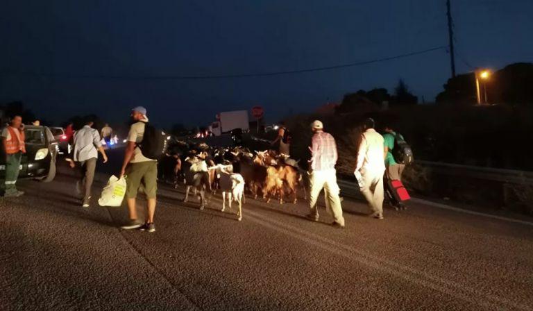 Κάτοικοι φεύγουν να σωθούν με βαλίτσες και τα ζώα τους   tanea.gr