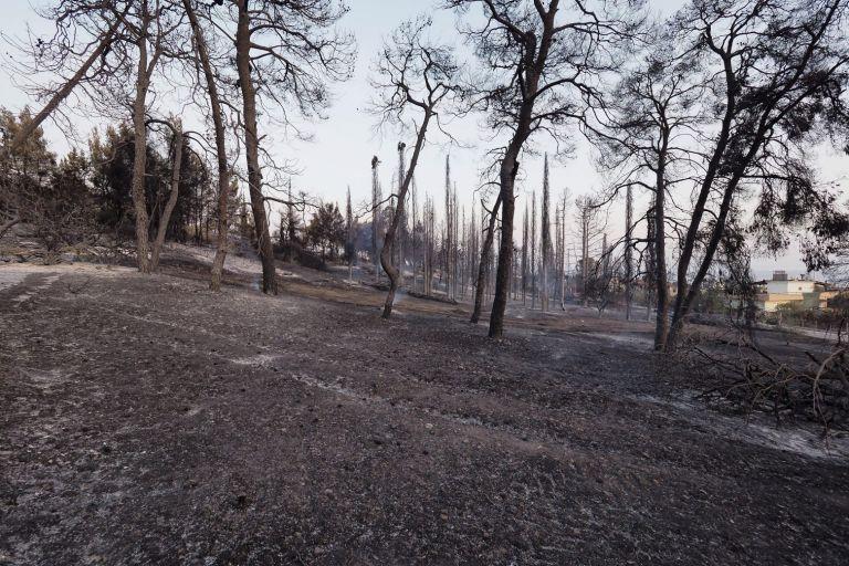 Αναδασωτέες όλες οι καμένες εκτάσεις εντός 30 ημερών   tanea.gr
