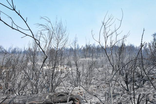 Επτά φορές μεγαλύτερος ο κίνδυνος πλημμύρας μετά τις πυρκαγιές | tanea.gr