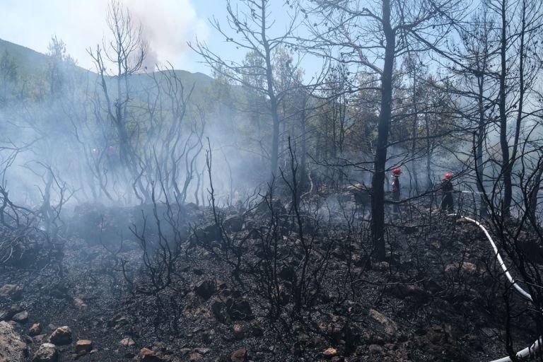 Φθιώτιδα – Προσήχθη 13χρονος για τις φωτιές στον Θεολόγο | tanea.gr