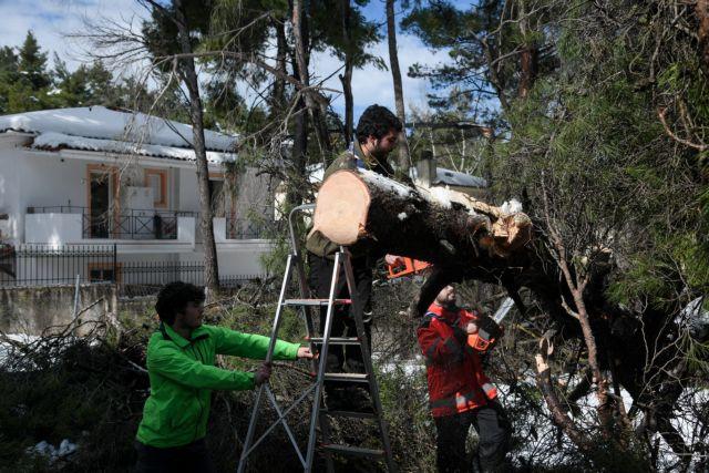 Απλοποιείται η διαδικασία για  για κλάδεμα και απομάκρυνση δέντρων σε ιδιωτικές εκτάσεις | tanea.gr