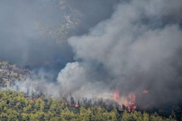 Κως – Φωτιά σε δασική έκταση | tanea.gr