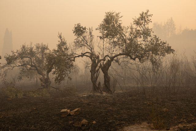 Χαρίζει 100.000 ελαιόδεντρα στην Αρχαία Ολυμπία αμερικάνικο ίδρυμα | tanea.gr