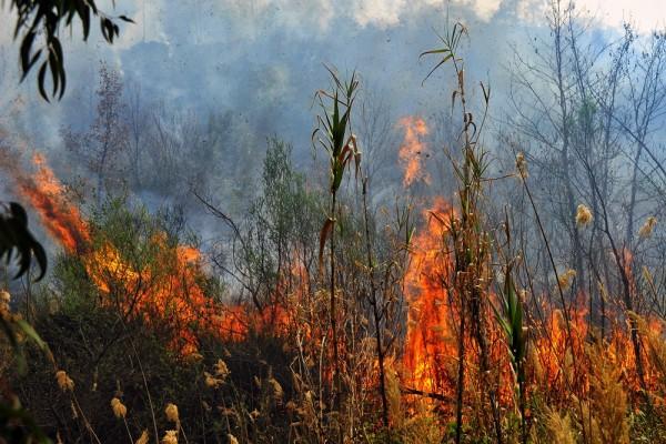Φωτιά στην Πάρνηθα – Μία προσαγωγή για εμπρησμό   tanea.gr