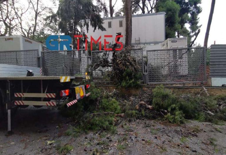 Πτώσεις δέντρων και προβλήματα στην ηλεκτροδότηση σε Θεσσαλονίκη και Κέρκυρα   tanea.gr