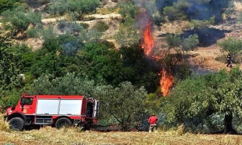 Κρήτη – Φωτιά στον Σταλό Χανίων | tanea.gr