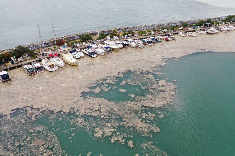 Θάλασσα Μαρμαρά – Εμφανίστηκε και πάλι η τοξική βλέννα – Φόβος από τους ψαράδες για μολυσμένα ψάρια | tanea.gr